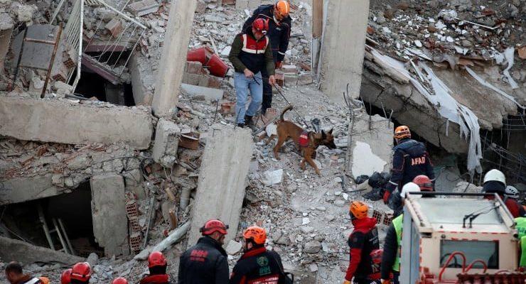 Türk Veteriner Hekimleri Birliği'nden depremzede hayvanlara ücretsiz tedavi