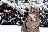 Onları unutmayın: Kediler 6 saat, köpekler 17 saat aç kalınca donarak ölüyor